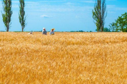 ウクライナの穀倉地帯